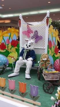 pough bunny